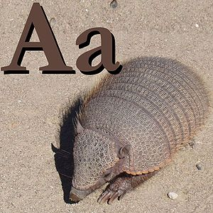 Alphabet book - A page from an alphabet book, showing the letter a and an armadillo