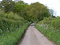A lovely Devon lane - geograph.org.uk - 1284210.jpg