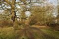 A quiet corner near Cannon Hill - geograph.org.uk - 336749.jpg