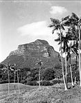 A view of the landscape at Lord Howe Island (23551478606).jpg