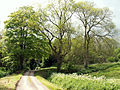 A view west, Woodnook Valley, Little Ponton, Lincolnshire, England 02.jpg