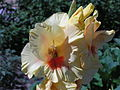 Ab plant 1293.jpg