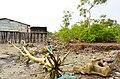 Abrasi Pantai dan rusaknya hutan mangrove di pesisir pantai komplek pekuburan tionghoa Panipahan - panoramio.jpg
