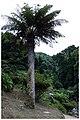 Achada - panoramio (9).jpg