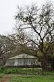 Acharya Jagadish Chandra Bose Indian Botanic Garden - Howrah 2011-02-20 1628.JPG