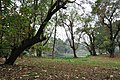 Acharya Jagadish Chandra Bose Indian Botanic Garden - Howrah 2011-02-20 1638.JPG