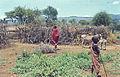 Afrika1963-016 hg.jpg