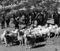 Albanian peasants.png