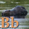 Alfabet zwierząt - literka B.png