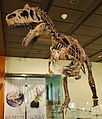 Allosaurus Big Al Two HMNS.jpg