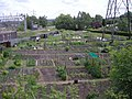Allotments by the junction - geograph.org.uk - 847603.jpg