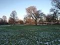 Alsterpark Baumbestand Harvestehude (4).jpg