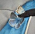 Amanda's Blue (Polyommatus amandus) with Silver-studded Blue male (Plebejus argus) (45744332312).jpg