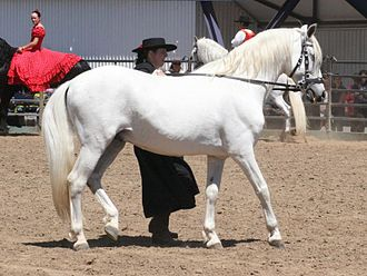 "Dominant white - The dark skin under a white hair coat, easily seen at the muzzle and genitals, shows that this white-looking horse is actually a gray. Most horses that look ""white"" are actually grays."
