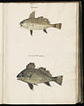 Animal drawings collected by Felix Platter, p1 - (156).jpg
