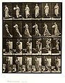 Animal locomotion. Plate 141 (Boston Public Library).jpg