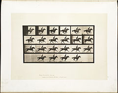 Animal locomotion. Plate 625 (Boston Public Library).jpg