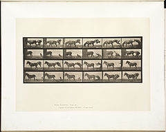 Animal locomotion. Plate 663 (Boston Public Library).jpg
