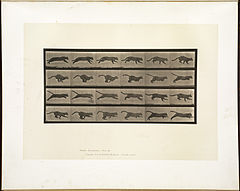 Animal locomotion. Plate 720 (Boston Public Library).jpg