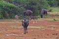 Animals at Pilanesberg National Park 15.jpg