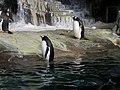 Antarctica- Empire of the Penguins (36448846664).jpg