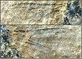 Apis (Synapis) dalica (10.3897-zookeys.775.24909) Figures 8–9.jpg