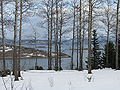 Arctic-Norway-aspen-Ofotfjord.jpg