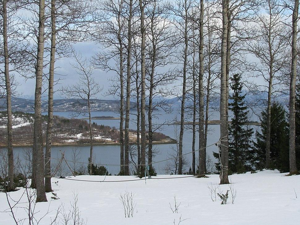Arctic-Norway-aspen-Ofotfjord