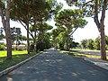 Area archeologica di Ostia Antica - panoramio (1).jpg