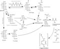 Argpyrimidine pathway.png