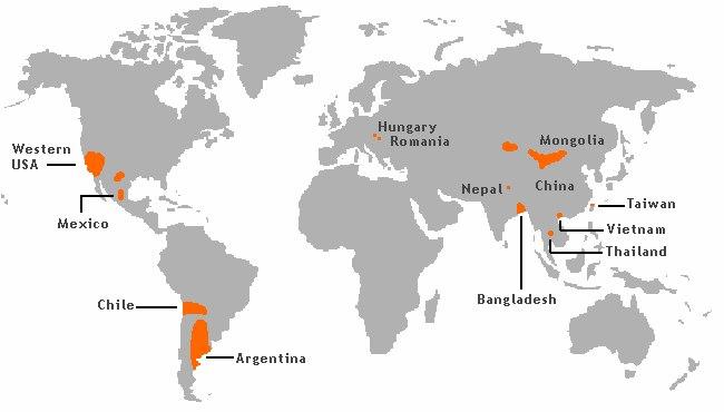 Arsenic contamination areas