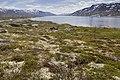 Aursjøen, Nesset, 2013 June.jpg