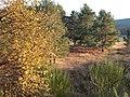 Autumn colours - geograph.org.uk - 1583602.jpg