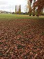 Autumn in Rologas Fields.jpg