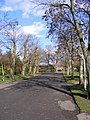 Avenue of trees in Baking Park - geograph.org.uk - 1732183.jpg