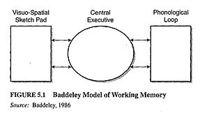 outline and evaluate the working memory model