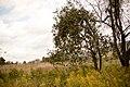 Bald Eagle State Park Apple Tree.jpg