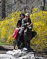 Balto by the ears forsythia jeh.jpg