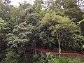 Ban Jhakri Falls - Sikkim - Wikipedia (10).jpg