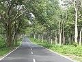 Bandipurforest.jpg
