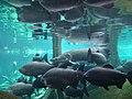 Barcelona Cosmocaixa Aquarium 04.jpg