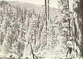 Bark beetle risk in mature ponderosa pine forests in western Montana (1972) (19732503503).jpg