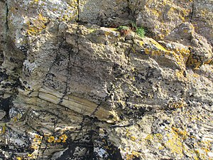 Orcadian Basin - Image: Base of tuff layer in Lower Eday Sst