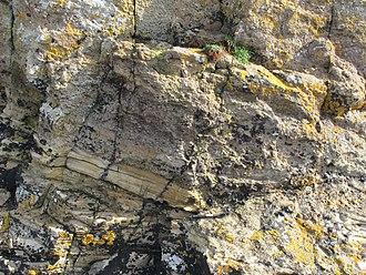 Orcadian Basin - Tuff layer within Eday Sandstone near Houton Head, Mainland, Orkney