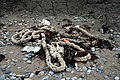 Beach Debris at Porth Neigwl (Hell's Mouth) - geograph.org.uk - 1024082.jpg