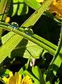Beauty among the weeds (10923505206).jpg
