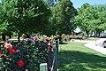 Benalla Rose Garden 001.JPG
