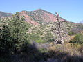 Big Bend National Park PB122627.jpg