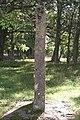 Bildsten Stenkumla 67 - KMB - 16000300017801.jpg