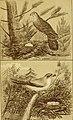 Bird-nesting in north-west Canada (1892) (14563660600).jpg